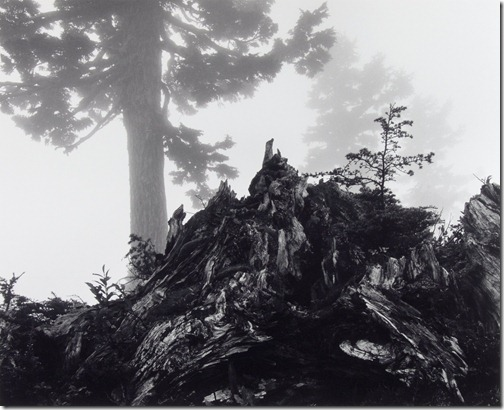 Ansel Adams_Tree, Stump and Mist, Northern Cascades, Washington